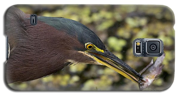 Green Heron Fishing Galaxy S5 Case