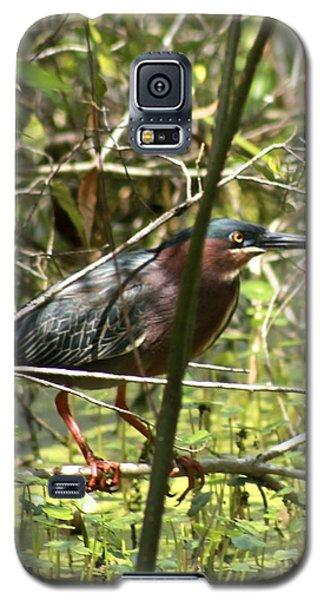 Green Heron Galaxy S5 Case by Jeanne Kay Juhos