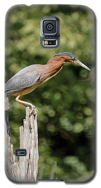 Green Heron On Stump Galaxy S5 Case by Bradley Clay