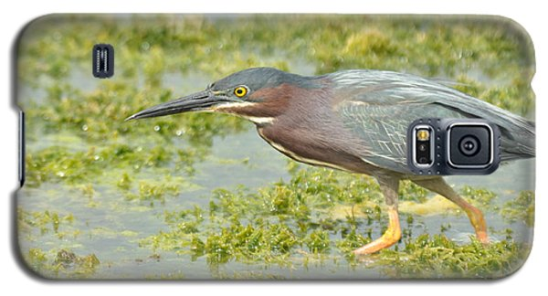 Green Heron On The Hunt Galaxy S5 Case