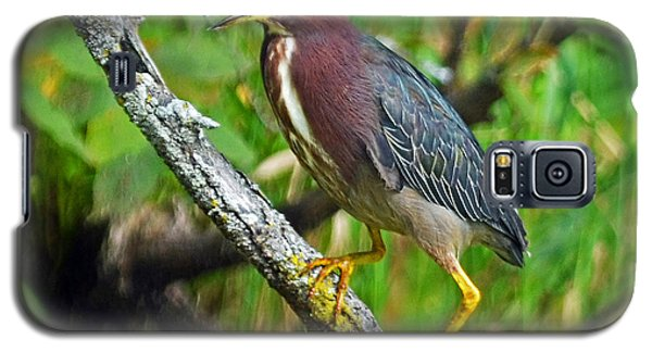 Galaxy S5 Case featuring the photograph Green Heron by Rodney Campbell