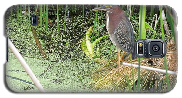 Galaxy S5 Case featuring the pyrography Green Heron by Ron Davidson
