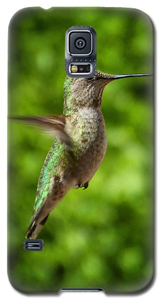 Green Hummingbird Galaxy S5 Case