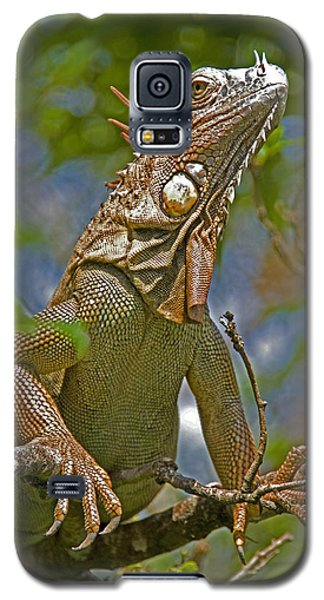 Galaxy S5 Case featuring the photograph Green Iguana by Dennis Cox WorldViews