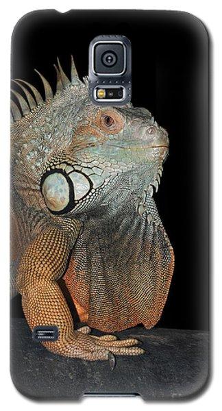 Green Iguana  Galaxy S5 Case by Judy Whitton