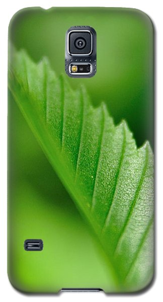 Galaxy S5 Case featuring the pyrography Green Leaf 002 by Todd Soderstrom