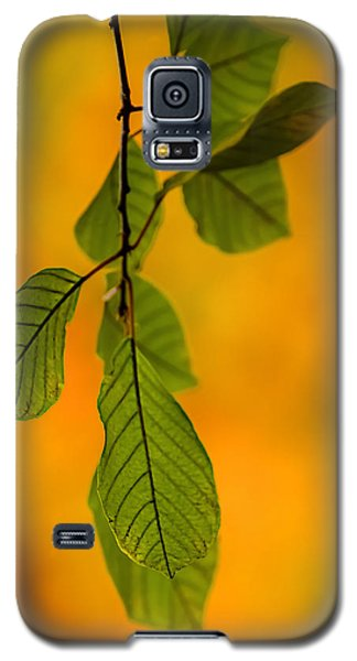 Green Leaves In Autumn Galaxy S5 Case