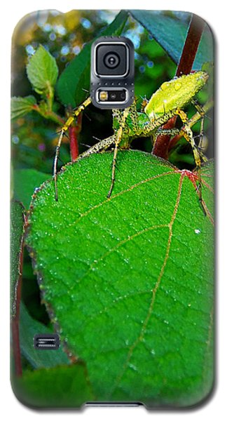 Galaxy S5 Case featuring the photograph Green Lynx Spider 002 by Chris Mercer