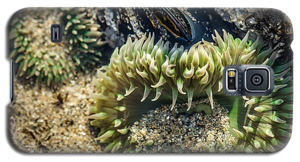 Green Sea Anemone Galaxy S5 Case by Linda Villers