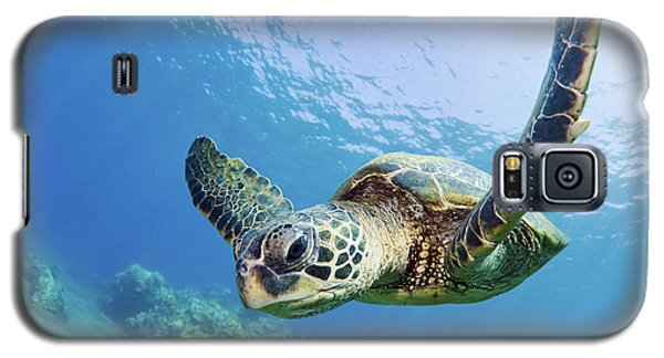 Green Sea Turtle - Maui Galaxy S5 Case by M Swiet Productions