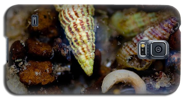 Green Shell Galaxy S5 Case by Carole Hinding