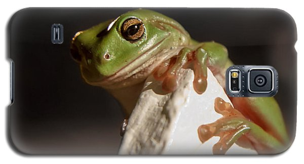 Green Tree Frog Keeping An Eye On You Galaxy S5 Case