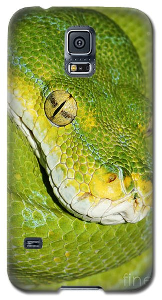 Galaxy S5 Case featuring the photograph Green Tree Python #2 by Judy Whitton