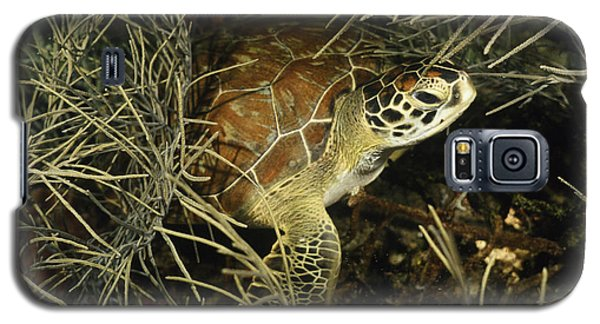 Green Turtle In Soft Corals Galaxy S5 Case