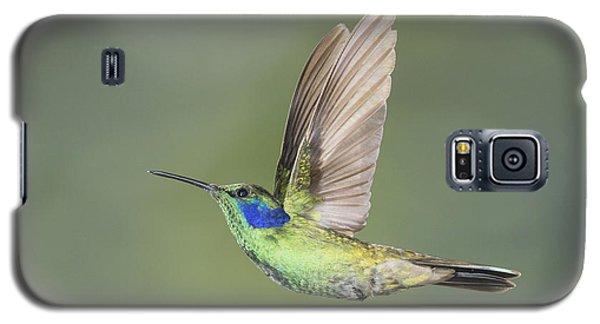 Green Violet-ear Hummingbird Galaxy S5 Case
