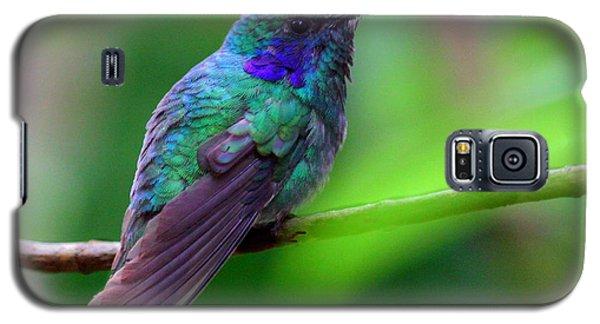 Green Violet Ear Hummingbird Galaxy S5 Case