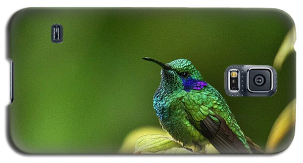 Green Violetear Hummingbird Galaxy S5 Case by Heiko Koehrer-Wagner