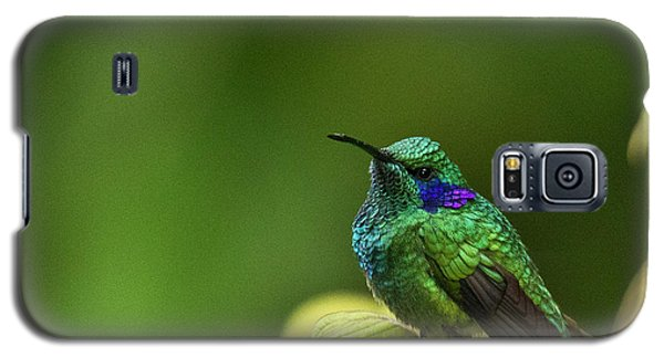 Green Violetear Hummingbird Galaxy S5 Case
