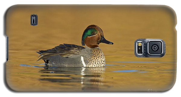 Green Wing Teal Galaxy S5 Case by Bryan Keil