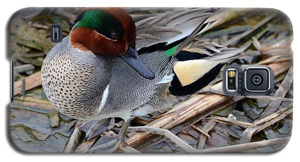 Galaxy S5 Case featuring the photograph Green-winged Teal by Debra Martz