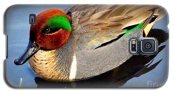 Green Winged Teal  Duck  Galaxy S5 Case by Susan Garren