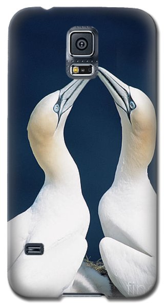 Greeting Northern Gannets Canada Galaxy S5 Case by