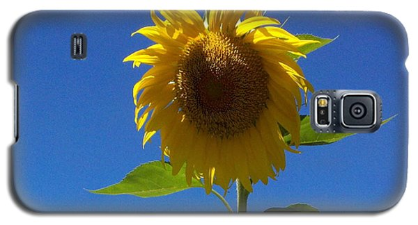 Sunflower With Open Arms Galaxy S5 Case