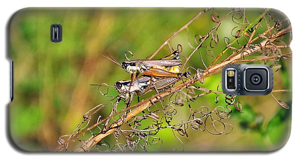 Gregarious Grasshoppers Galaxy S5 Case by Al Powell Photography USA