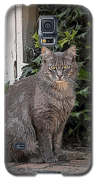 Galaxy S5 Case featuring the photograph Grey Cat by Donald Williams