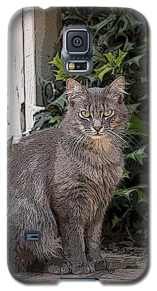 Grey Cat Galaxy S5 Case by Donald Williams
