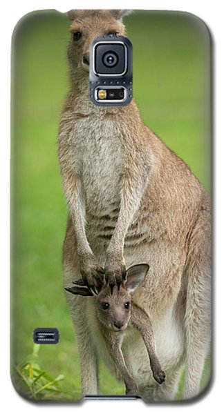 Grey Kangaroo And Joey  Galaxy S5 Case