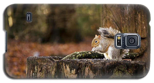 Grey Squirrel On A Stump Galaxy S5 Case by Spikey Mouse Photography