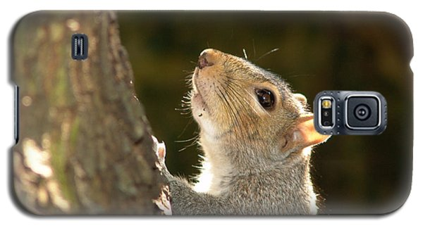 Galaxy S5 Case featuring the digital art Grey Squirrel by Ron Harpham