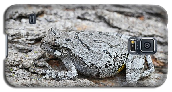 Galaxy S5 Case featuring the photograph Cope's Gray Tree Frog by Judy Whitton