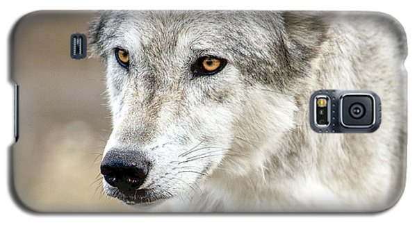 Galaxy S5 Case featuring the photograph Grey Wolf Eyes by Yeates Photography