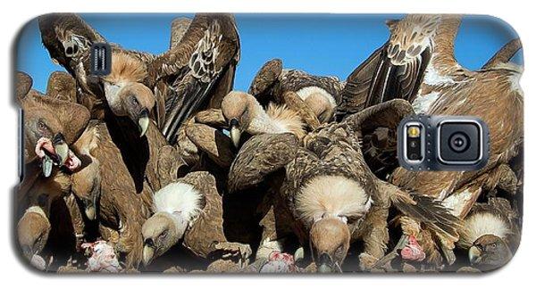 Griffon Vultures Feeding Galaxy S5 Case