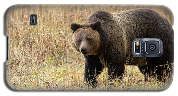 Grizz Galaxy S5 Case
