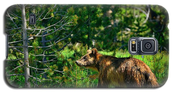 Galaxy S5 Case featuring the photograph Grizzly Bear 760 by Greg Norrell
