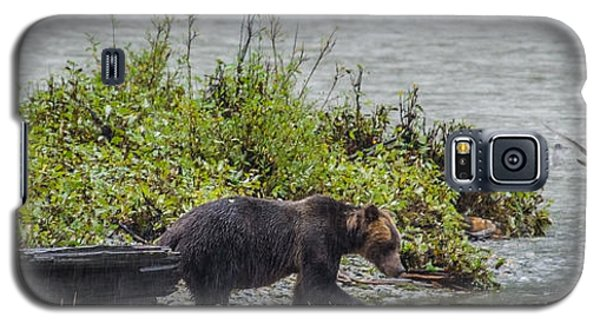 Grizzly Bear Late September 4 Galaxy S5 Case