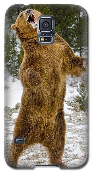 Galaxy S5 Case featuring the photograph Grizzly Standing by Jerry Fornarotto