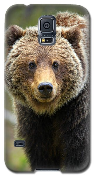 Brown Bear Galaxy S5 Case - Grizzly by Stephen Stookey