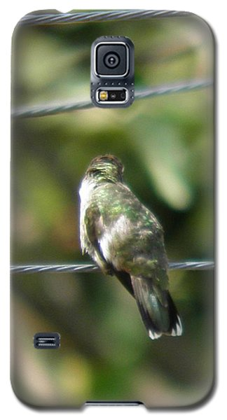 Galaxy S5 Case featuring the photograph Grooming Hummer by Nick Kirby