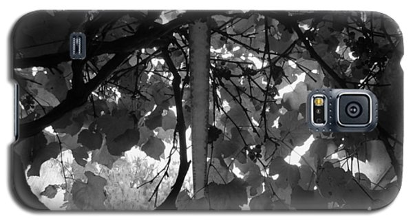 Galaxy S5 Case featuring the photograph Gropius Vine - Black And White by Joseph Skompski