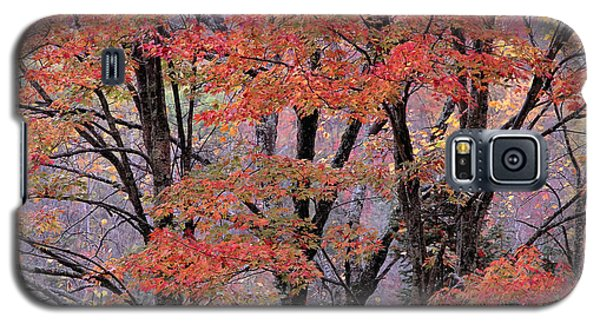Groton Forest Maples Galaxy S5 Case by Alan L Graham