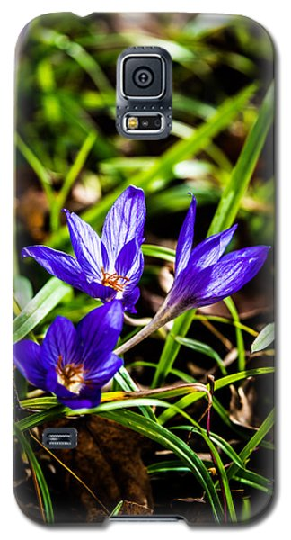 Galaxy S5 Case featuring the photograph Hocus Crocus by Dee Dee  Whittle