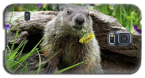 Groundhog  Kit Marmota Monax Galaxy S5 Case by Debbie Dicarlo