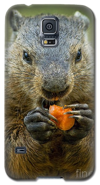 Groundhogs Favorite Snack Galaxy S5 Case by Paul W Faust -  Impressions of Light