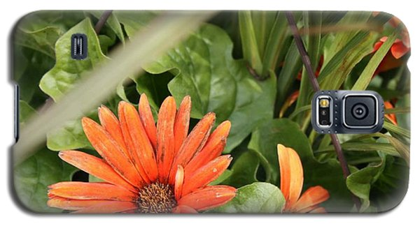 Group Of Orange Daisys Galaxy S5 Case
