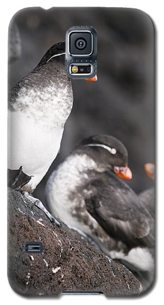 Group Of Parakeet Auklets, St. Paul Galaxy S5 Case by John Gibbens