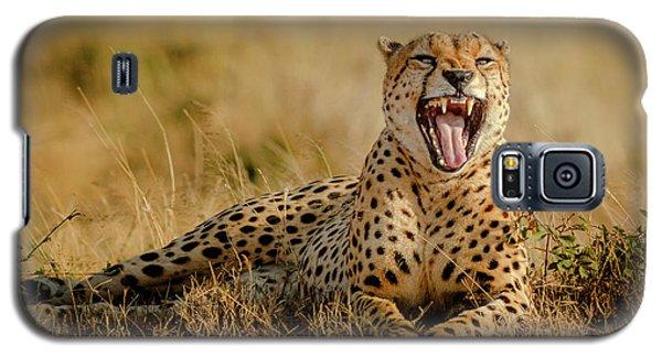 Cheetah Galaxy S5 Case - Grumpy Morning by Husain Alfraid
